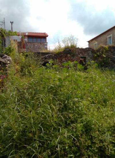Land in Riglia