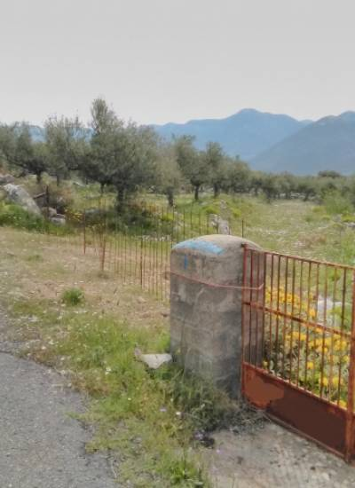 Land for sale with 105 olive trees