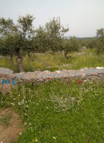 Land with 220 olives